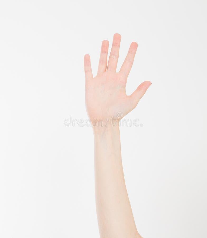 Mano isolata su bianco Mano di voto Derisione su Copi lo spazio mascherina blank immagine stock libera da diritti