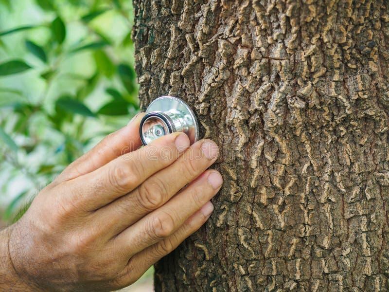 Mano masculina que escucha un árbol con un estetoscopio, ambiente de la reserva imagen de archivo libre de regalías