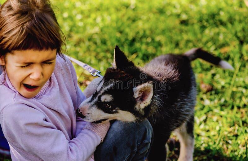 Mano mordace delle bambine del cucciolo del husky immagine stock