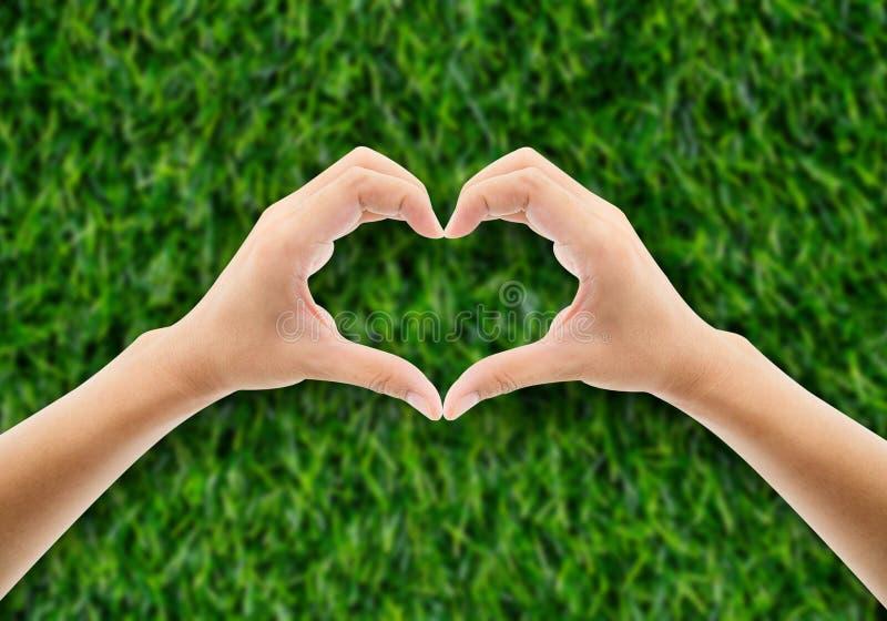 Mano nell'erba sotto forma di mano del cuore che tiene verde fotografia stock libera da diritti