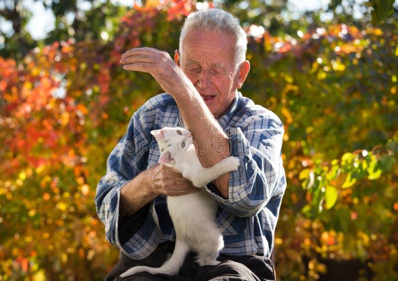 Mano penetrante del ` s del hombre mayor del pequeño gato imagenes de archivo