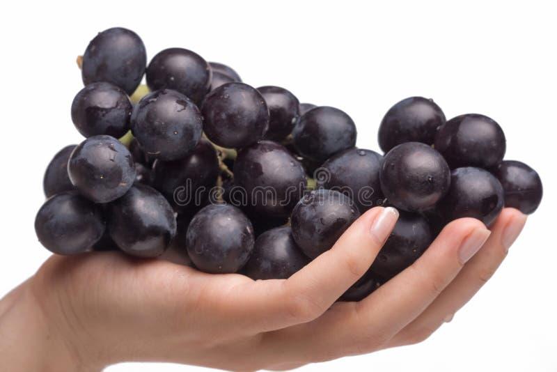 Mano que guarda las uvas imágenes de archivo libres de regalías