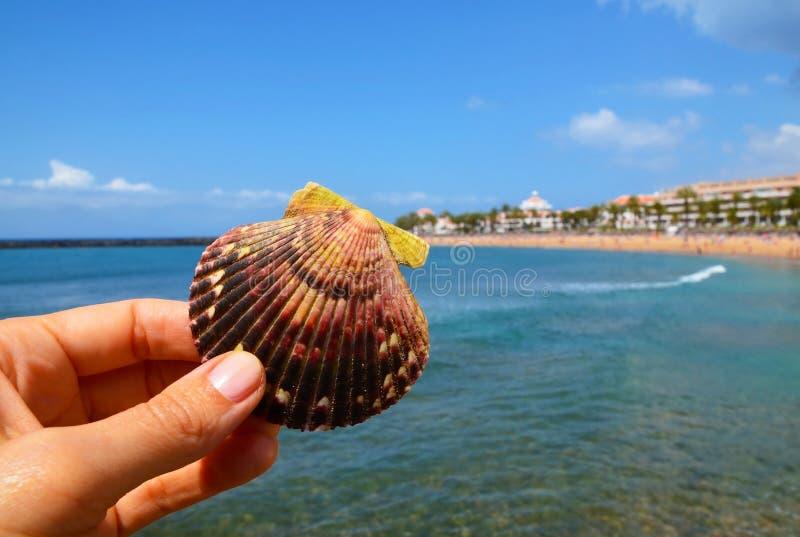 Mano que lleva a cabo la cáscara hermosa del mar en un fondo tropical borroso de la playa Concha marina en los fingeres de las mu imagen de archivo libre de regalías
