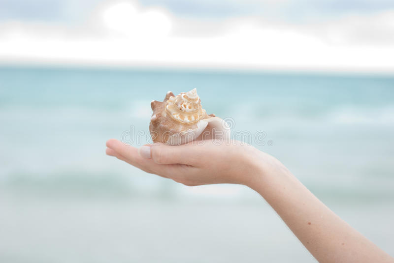 Mano que lleva a cabo un shell del mar fotos de archivo libres de regalías