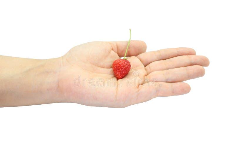 Mano que sostiene algunas pequeñas fresas rojas frescas aisladas en el fondo blanco fotografía de archivo libre de regalías