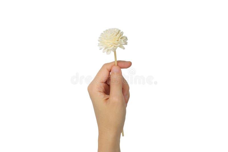 Mano que sostiene la flor seca imagen de archivo libre de regalías