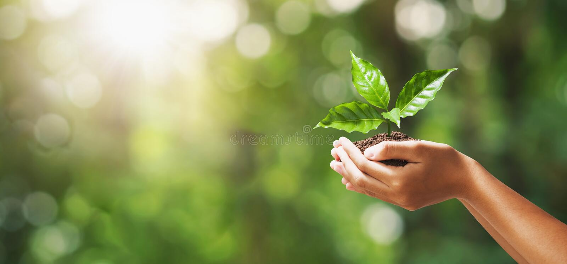 mano que sostiene la plántula en fondo verde de la naturaleza de la falta de definición D?a de la Tierra del eco del concepto imagenes de archivo