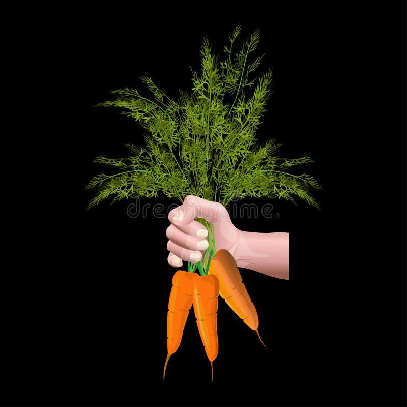 Mano que sostiene zanahorias stock de ilustración