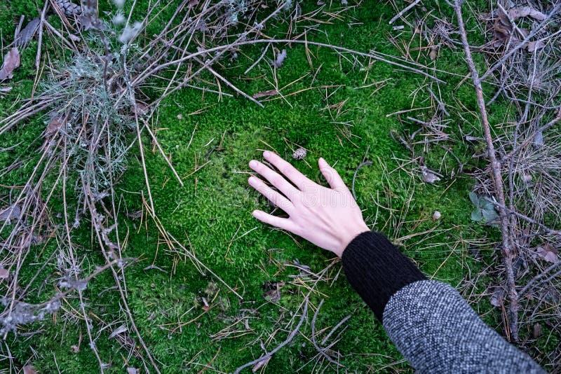 Mano que toca la hierba verde del césped en el bosque Vista superior de un femal foto de archivo libre de regalías