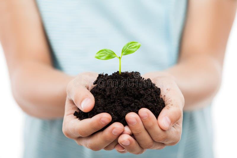 Mano umana che tiene crescita verde della foglia del germoglio al suolo della sporcizia immagini stock