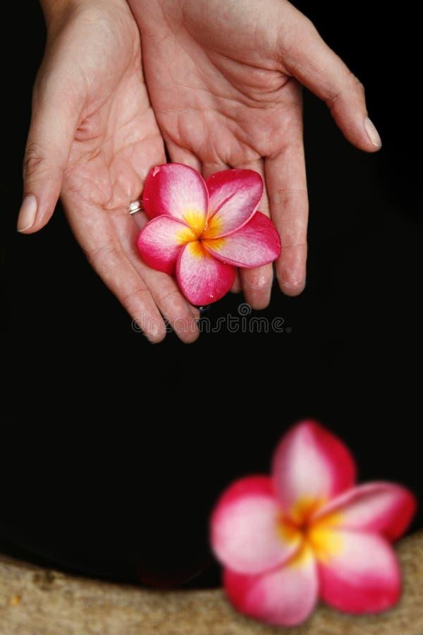 Mano y flores foto de archivo