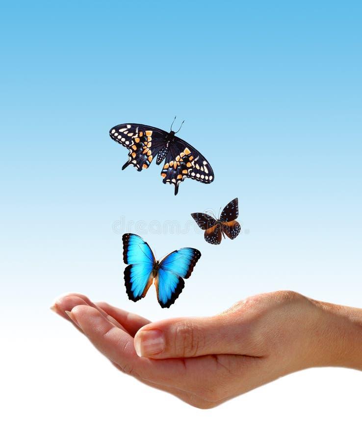Mano y mariposas imágenes de archivo libres de regalías