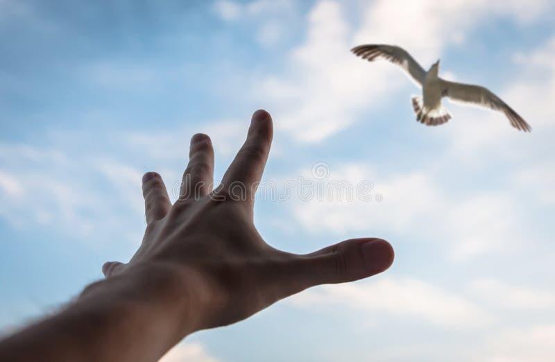 Mano y pájaro en el cielo. imagen de archivo
