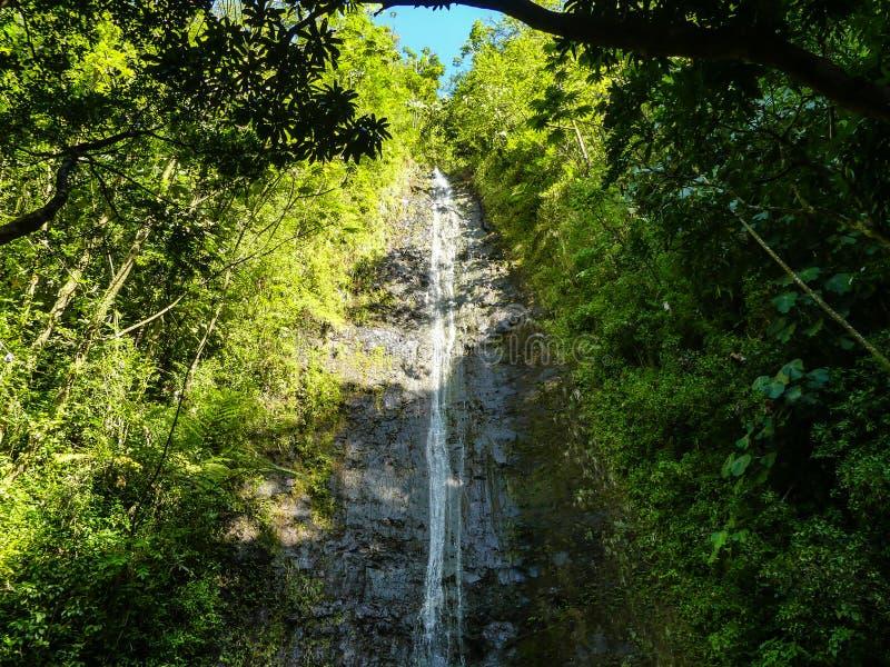Manoa cai Oahu Havaí imagem de stock