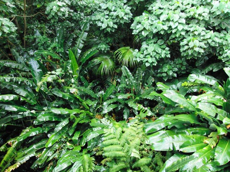 Manoa fällt Wald lizenzfreie stockfotografie