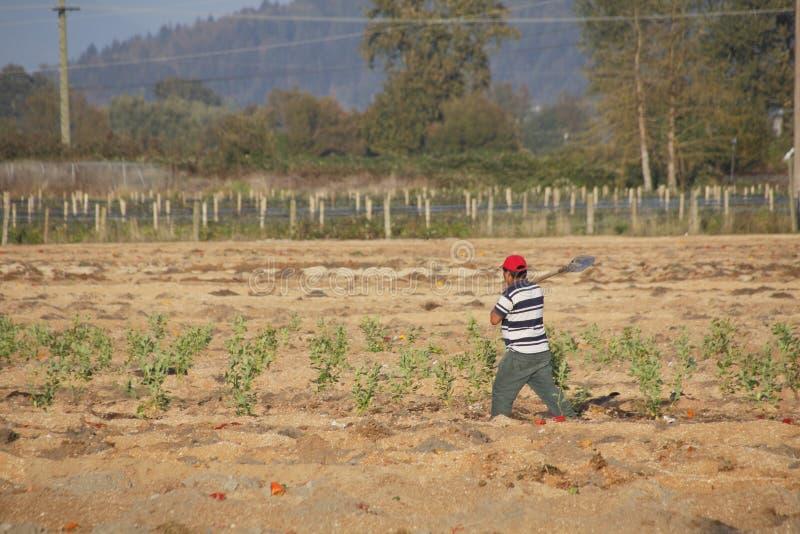 Manodopera agricola migratore fuori da lavorare fotografia stock