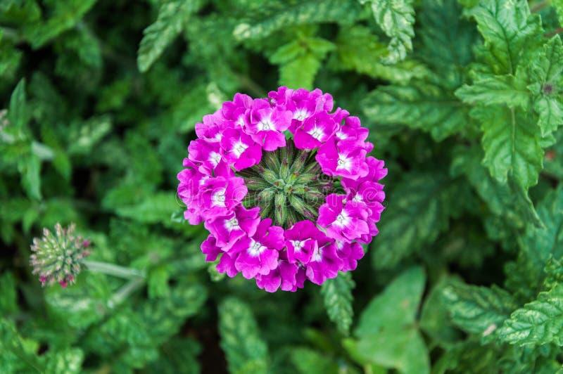 Manojo circular dispuesto de flores púrpuras brillantes imagen de archivo libre de regalías