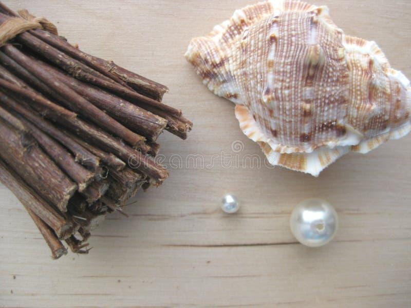Manojo con el seashell foto de archivo libre de regalías