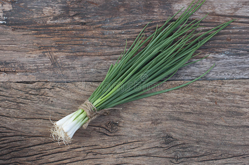 Manojo de cebollas de la primavera fotografía de archivo libre de regalías