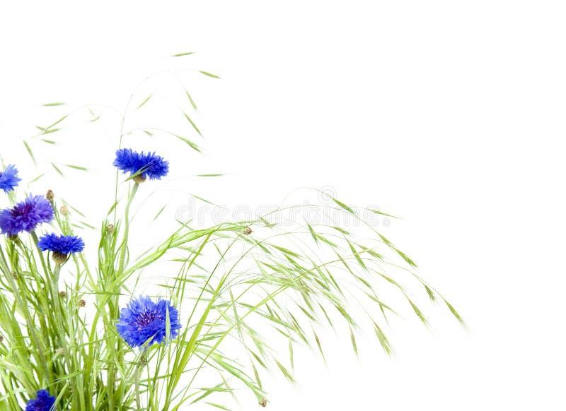 Manojo de cornflowers y de hierbas fotos de archivo
