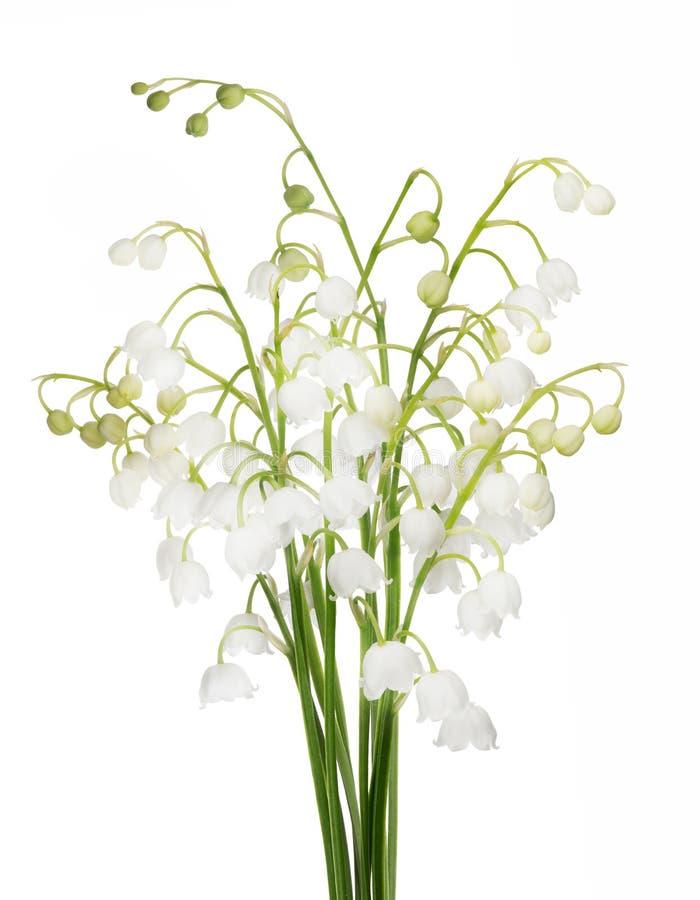 Manojo de flores blancas del lirio de los valles foto de archivo