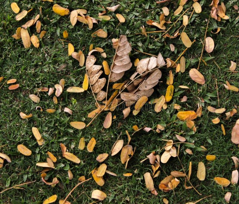 Manojo de hojas fotos de archivo libres de regalías