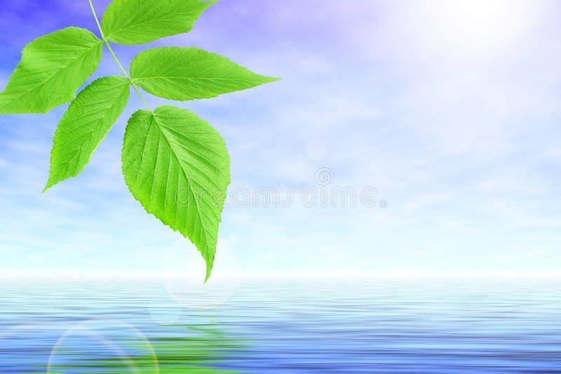 Manojo de hojas del verde sobre piscina tranquila ilustración del vector