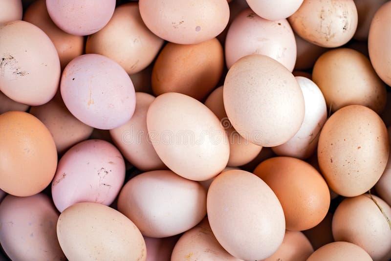 Manojo de huevos frescos del pollo recogidos foto de archivo libre de regalías