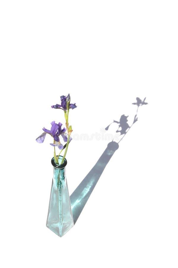 Manojo de iris en el florero de cristal de la turquesa en la decoración blanca del fondo con las flores imágenes de archivo libres de regalías