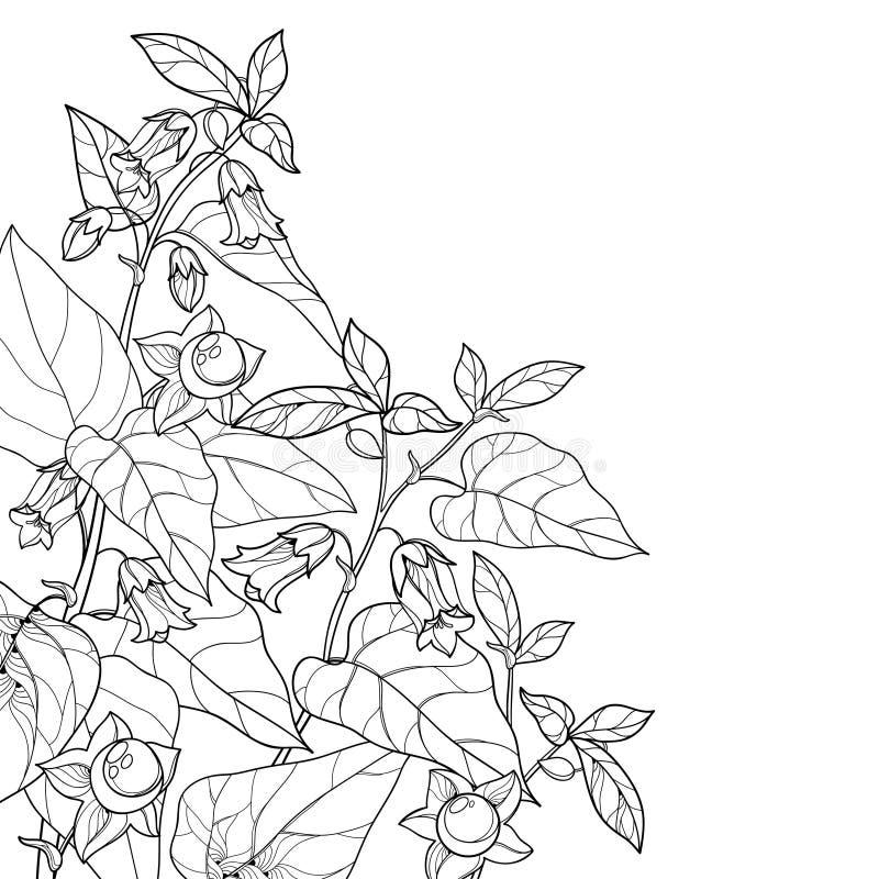 Manojo de la esquina del vector de belladona tóxica del Atropa del esquema o de flor del nightshade mortal, de brote, de baya y d libre illustration
