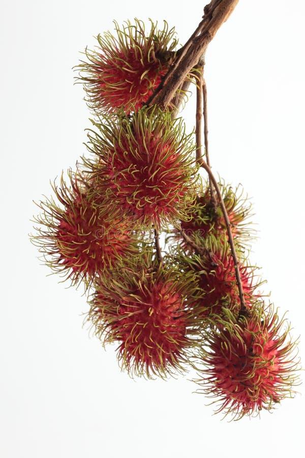 Manojo de la fruta del Rambutan foto de archivo libre de regalías