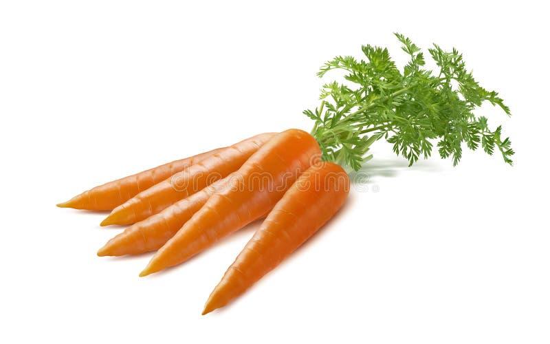 Manojo de la zanahoria aislado en el fondo blanco imagenes de archivo