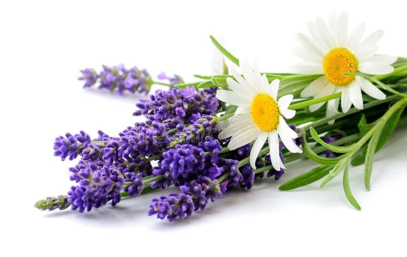 Manojo de las flores de las margaritas y de la lavanda en el fondo blanco imagen de archivo libre de regalías