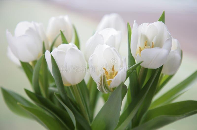 Manojo de los tulipanes fotografía de archivo libre de regalías