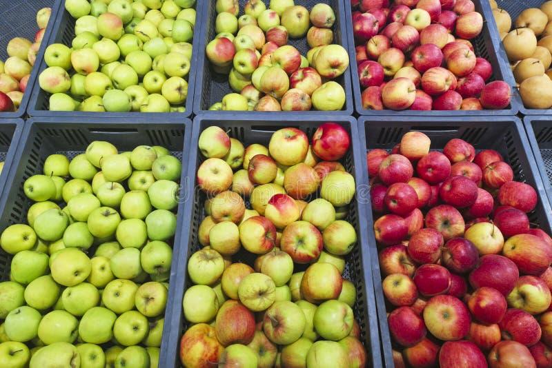 Manojo de manzanas rojas y verdes en las cajas en supermercado Manzanas rojas y verdes en el mercado de los granjeros Manzanas qu imágenes de archivo libres de regalías