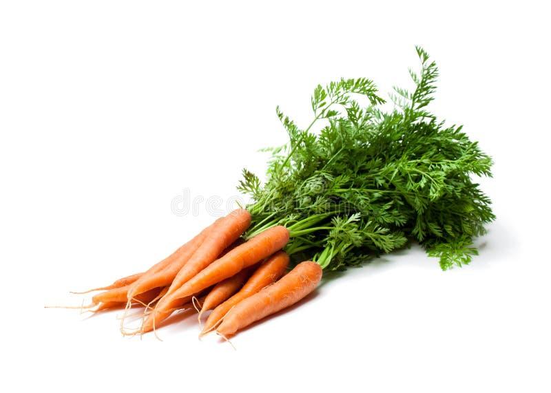 Manojo de nuevas zanahorias aisladas en blanco fotografía de archivo