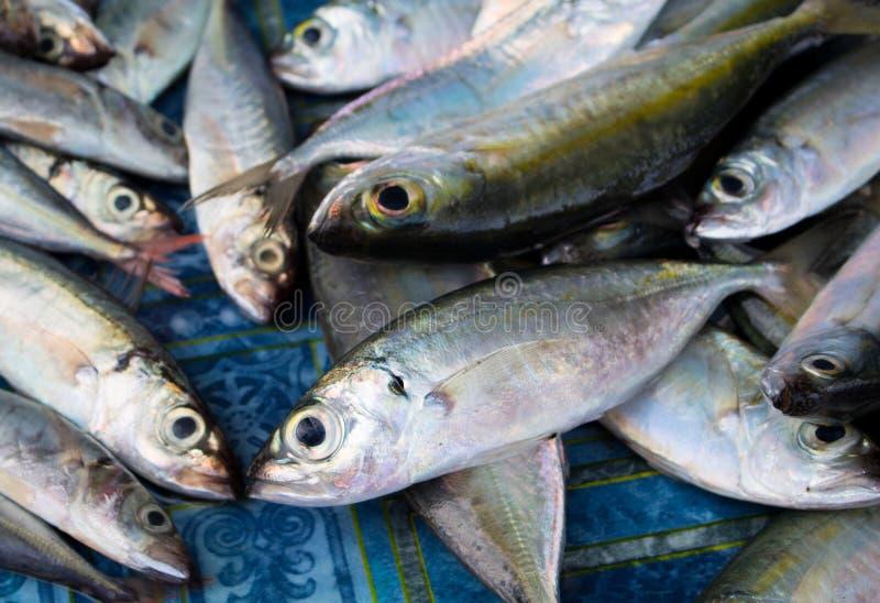 Manojo de peces de mar en la tabla de madera pescados de for Tabla de alimentacion para peces cachama