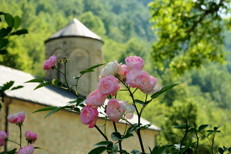Manojo de pequeñas rosas, Montenegro fotos de archivo