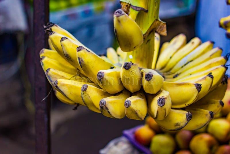 Manojo de plátanos amarillos atados al tallo para la venta en mercado estupendo imagen de archivo libre de regalías