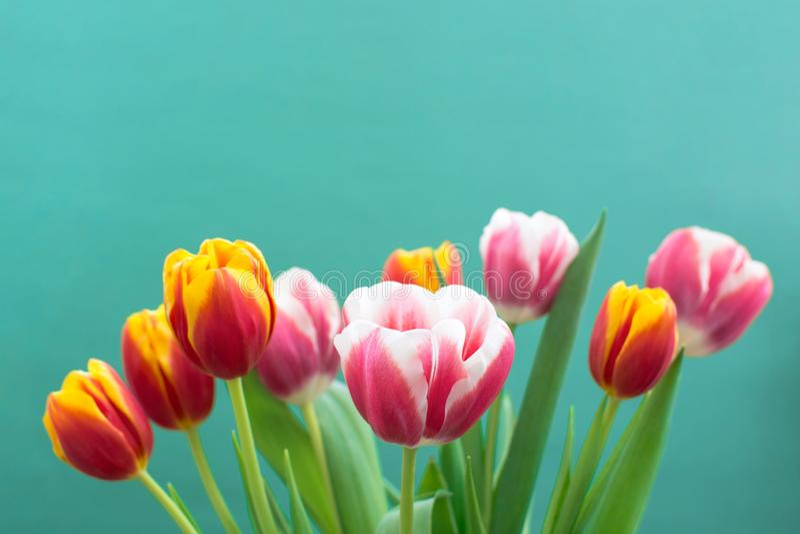 Manojo de primavera Tulip Flower imagen de archivo