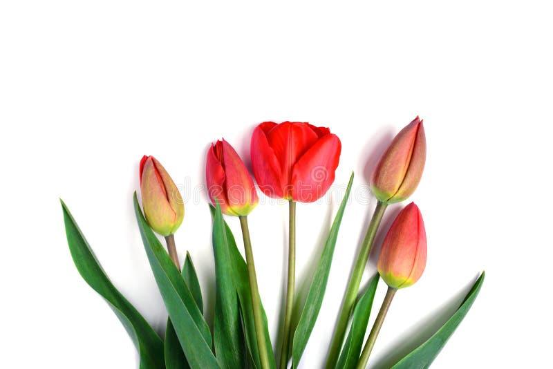 Manojo de ramo rojo de los tulipanes aislado en el fondo blanco imagenes de archivo