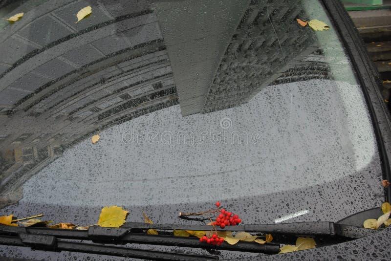 Manojo de serbal en el mojado del coche de la lluvia imagen de archivo libre de regalías