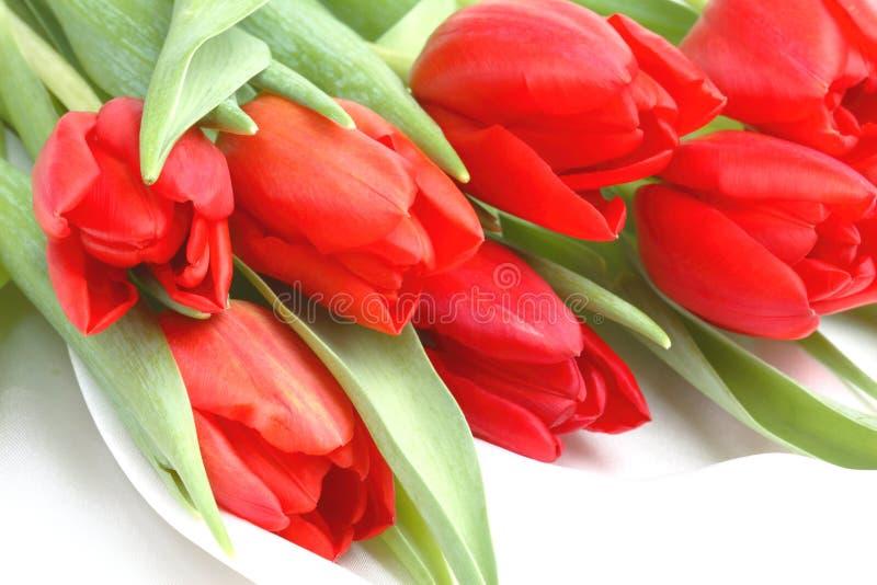 Manojo de tulipanes rojos fotos de archivo libres de regalías