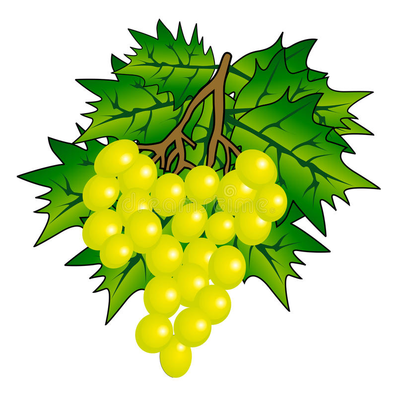 Manojo de uva stock de ilustración
