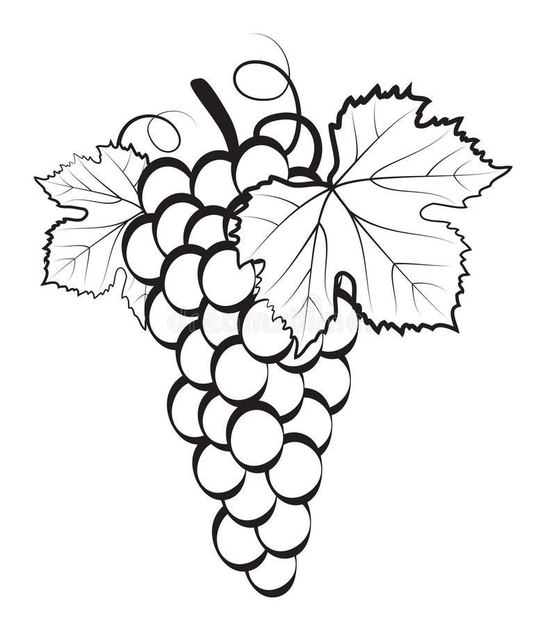 Manojo de uvas stock de ilustración