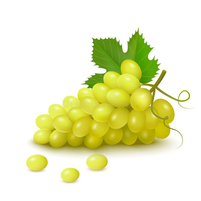 Manojo de uvas blancas stock de ilustración