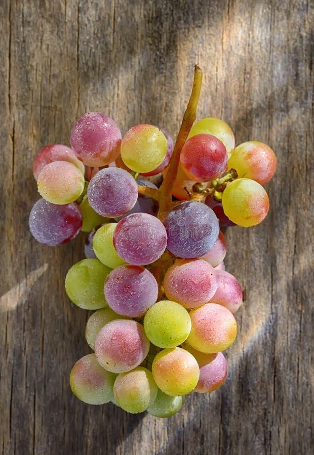 Manojo de uvas de vino inmaduras fotografía de archivo libre de regalías
