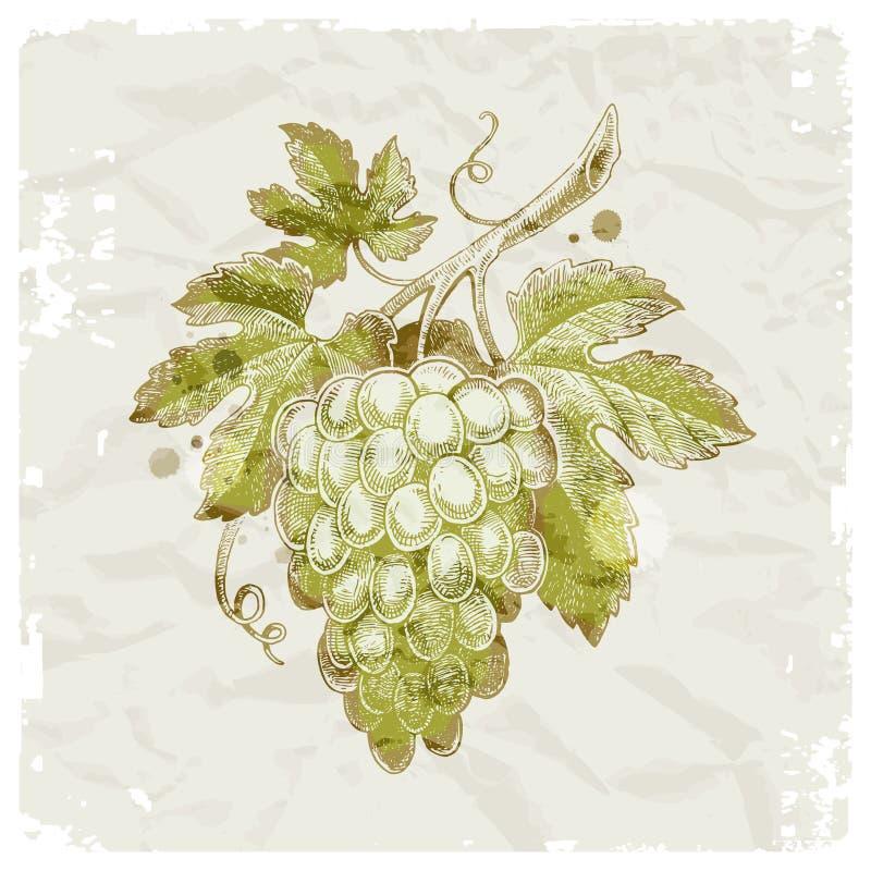 Manojo de uvas drenado mano ilustración del vector