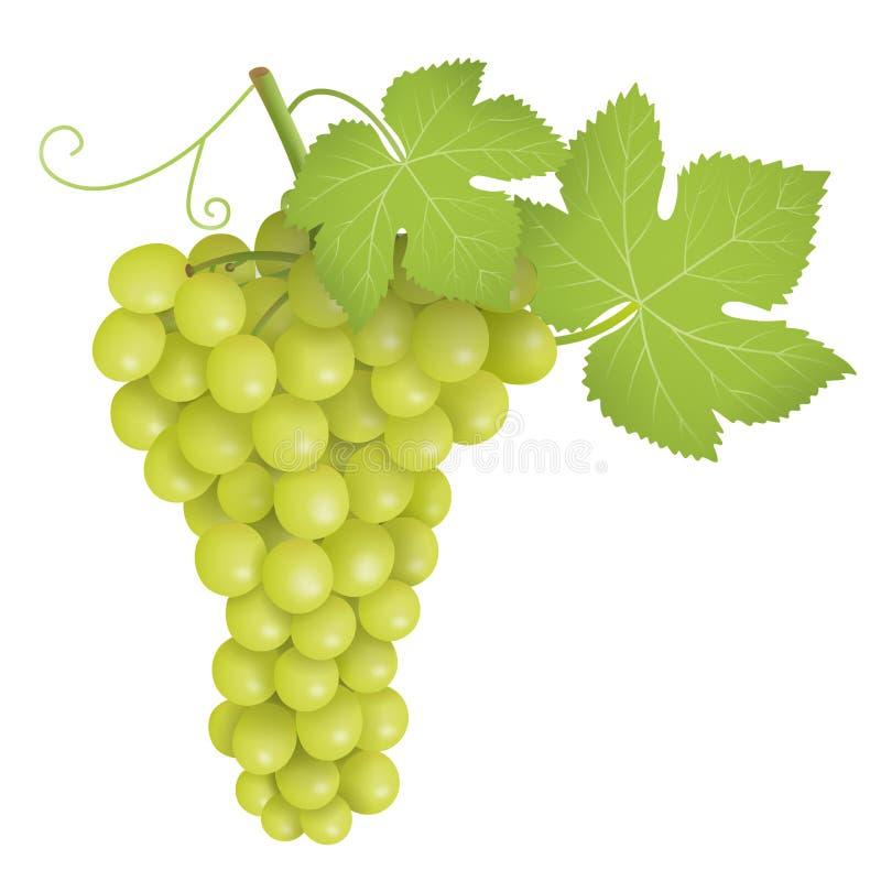 Manojo de uvas verde Las uvas verdes agrupan vector del ejemplo ilustración del vector