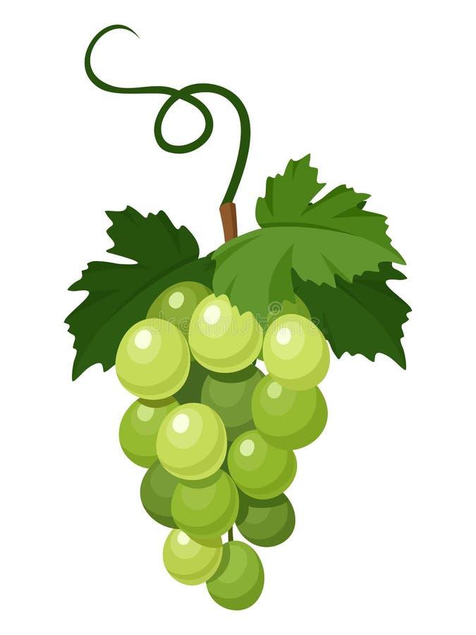 Manojo de uvas verdes. ilustración del vector
